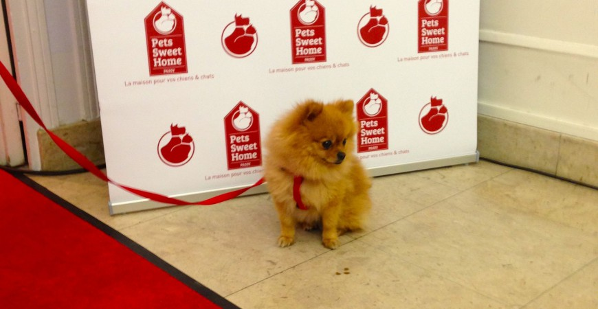 PET SWEET HOME STORE  PARIS #OPENING